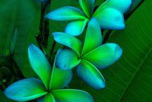 Hawaiian Beauty / by Christy Newsome