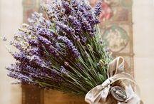 lavender / by Jessamyn Sommers
