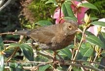 Birds / #Birds / by My Lap Shop Publishers