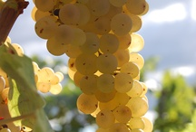 ~Bailey's Wine Tasting~ / by Paula Cummings
