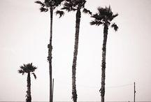 Beach / by Summer Elizabeth-Ann