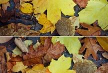 BONFIRES AND FALLING LEAVES / by rachel joy baransi