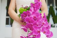Flower: Orchids / by Rose of Sharon Floral Designs, Althea Wiles