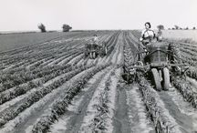 Farming Past / by PARTDEAL.com
