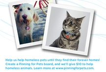 Pinning for Pets / by Samantha Knittel