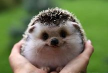 cute animals / by creajettie