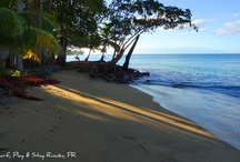 Rincon PR - Beaches / Rincon Puerto Rico has some of the most beautiful beaches in the Caribbean. From great surfing beaches to calm quiet crystal clear water, Rincon PR has it all when it comes to beaches! / by Rincon Puerto Rico