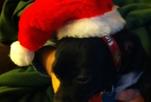 Happy Holidays, with pets / Being able to include your pets and animal friends in the holidays is one of the greatest gifts. / by Joan Morris