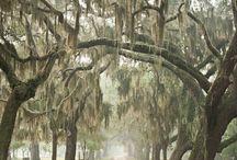 South Carolina <3 / by Leah Stone