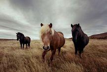 Iceland / by Lorraine Callaway