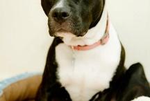 Princess: Spoiled Doggie / by Jess Bedsole