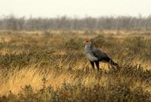 Birds / Feathers go here. / by Stephanie Riniel Jasmina