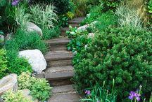 And down a garden path / by Victoria Feinhor