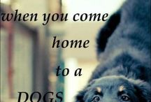 Dogs / by Suzi Gee