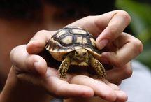 Desesrt Tortoise / by Dawn Czech
