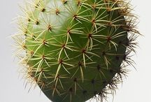 Cactus & Succulants / by Eve Hogue