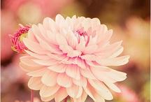 Flowers / by Helen Walker