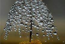 dewdrops / by Lillian Minne