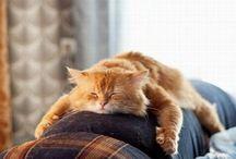 Daily Cats / Un chat le matin, parce que ça fait du bien ! / by Le Mouv'