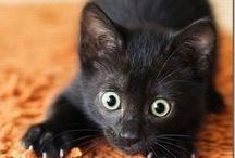 Kitties / by Stephanie Rojas
