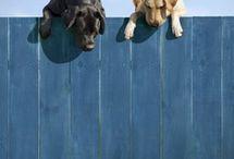 Appreciation: Canine / by Amy L0uAldaMay
