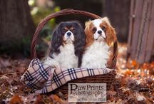 To love a Cavalier... / by Michele at Mish
