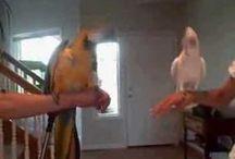 Bird Videos / by Very Funny Videos