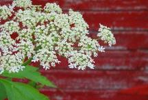 Flowers / by Nancy Kroeker Boothe