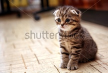 Whiskers on Kittens / by Shutterstock