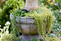 garden / by Rita Dippenaar