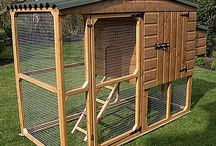 Chicken Coop Ideas / by Jane Rees
