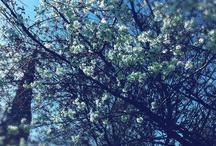 Spring / by Alex K