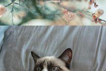 Grumpy Cat! / by Maggie Doty