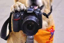 Photography Funnies  / by ACDSystems .com
