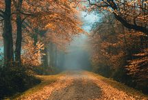 Nature / by Lisa Cavera