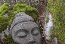 Buddha / by Shannon Alford