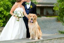 Wedding / by Katie Tracy