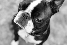 Winston / by Jackie Goebel