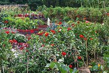 Garden / by rika abargil