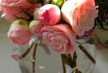 Camellias / by Kim Longhurst