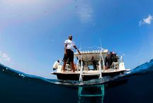 Dive Tikaye with Island Divers / A well equipped dive shop offering a series of courses and specialty dives  as well as Discover SCUBA Diving classes. Island Divers truly is a divers' perfect one stop shop for everything dive located on the beach. Not only is the property located within a marine reserve, divers will enjoy some of the best dive spots on the island including the Lesleen M wreck; a 165-foot freighter that was sunk in the bay in 1986 and the Anse Cochon Cove, one of the best diving hotspots on the island. / by Ti Kaye Resort & Spa