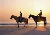 Horseback / by Kerri Dolan-Walker