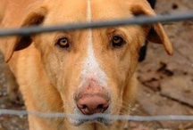Bonafide Giving Back  / Is your dog Bonafide? Bonafide ways to get involved and Give Back - www.bonafidepetfoods.com   / by Bonafide Holistic Dog Food