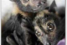 Batty for Bats / by Georgia Stone