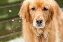 2014 Dogs of Stapleton Calendar (Winners) / Meet next year's calendar canines!  #DogsOfStapleton #LoveStapleton / by StapletonDenver