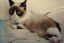 Grumpy Cat / by Edna De la Cruz