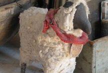 sheep / by Shirley Puffer