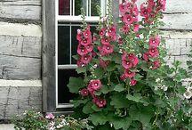 My Secret Garden / by Emily Davis