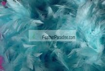 Tiffany Blue theme wedding / by Feather Paradise