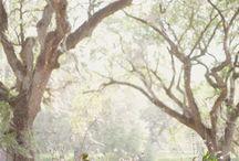 Wedding ideas i love / by RubyRainDecor